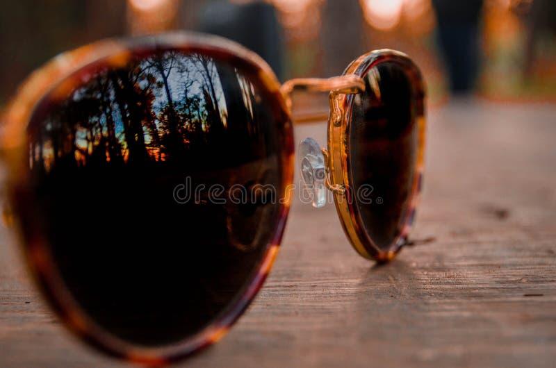 Солнечные очки смотря заход солнца стоковое изображение rf