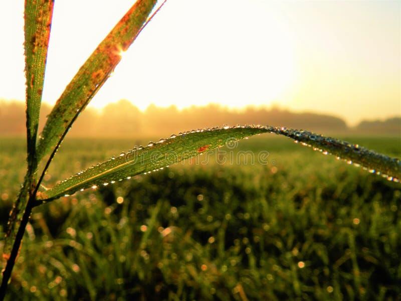 Солнечные падения тумана на траве стоковые изображения rf