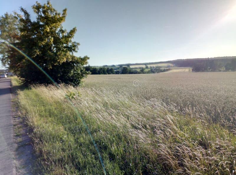 Солнечный день на поле стоковые фото