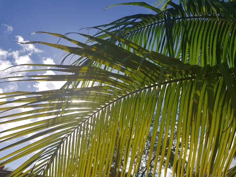 Солнечный день под ладонями стоковая фотография rf