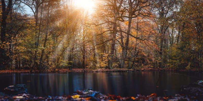 Солнечный луч лучей солнца осени кажется trought красивыми ветвями дерева и листья в городе паркуют с прудом в фронте  стоковое фото rf