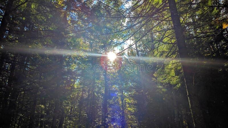 Солнечный луч между деревьями стоковые изображения