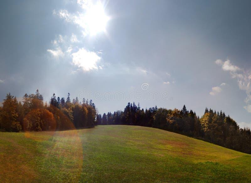 Солнечный луч над зеленым лугом и ели в панораме осени стоковые фотографии rf