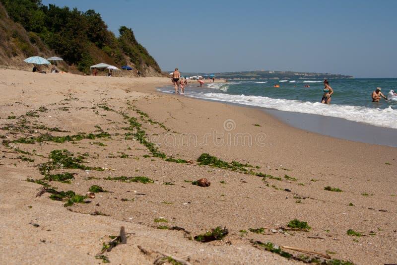 Солнечный пляж с водорослями брошенными на песок стоковое изображение