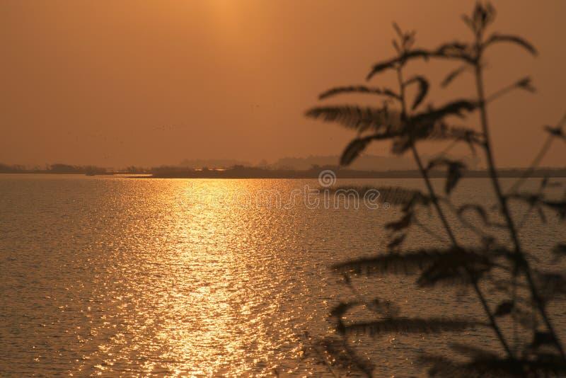 Солнечный свет золота отражая на поверхности воды за кустом дерева оз стоковое фото