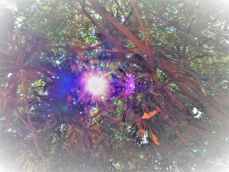 Солнечный свет приходя вне от зазора деревьев стоковые изображения rf