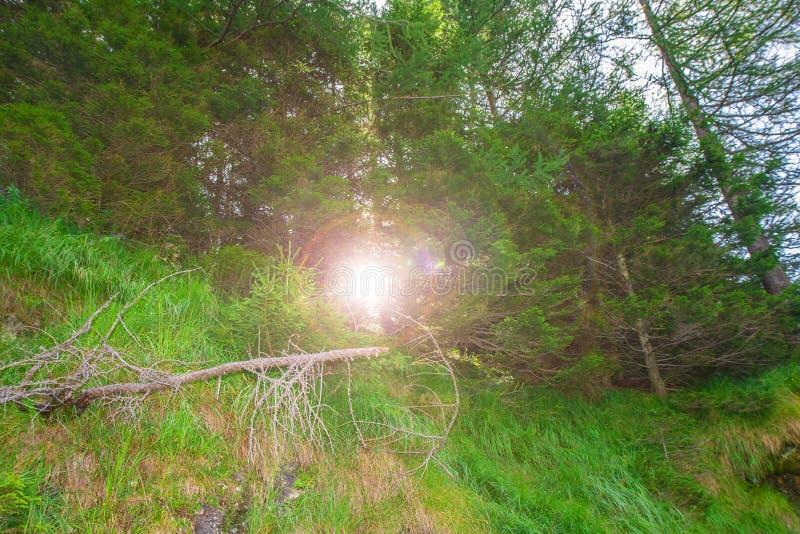 Солнечный свет пропуская через деревья в горах стоковые фото