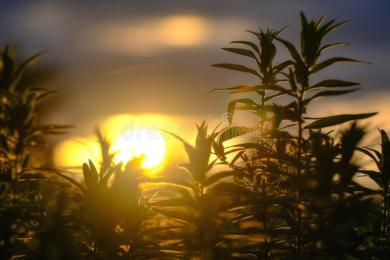 Солнечный свет, трава и эмоции осени стоковое фото