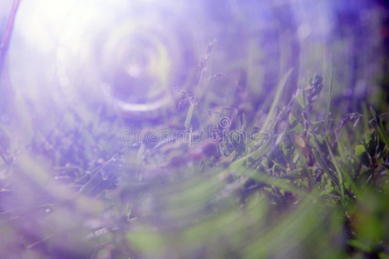 Солнечный тоннель водит к солнцу на травянистом следе стоковые изображения