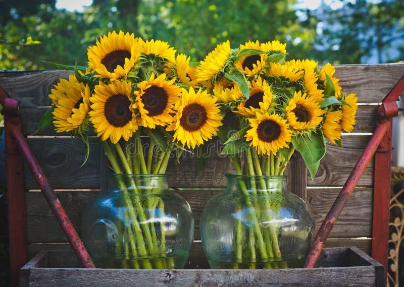 Солнцецветы в вазах стоковое изображение