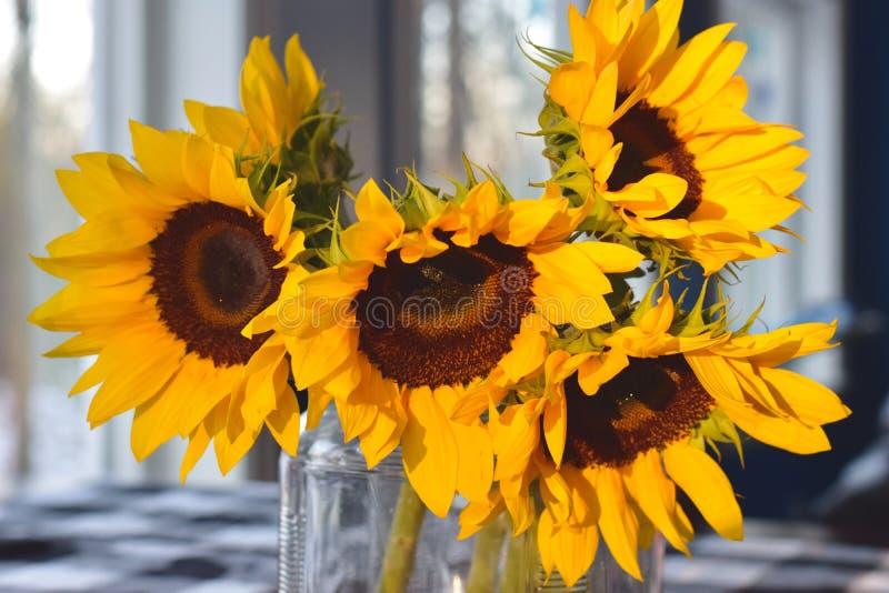 Солнцецветы в солнечном свете стоковые изображения rf