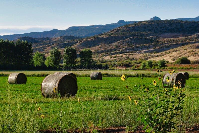 Солнцецветы и связки сена стоковые фото