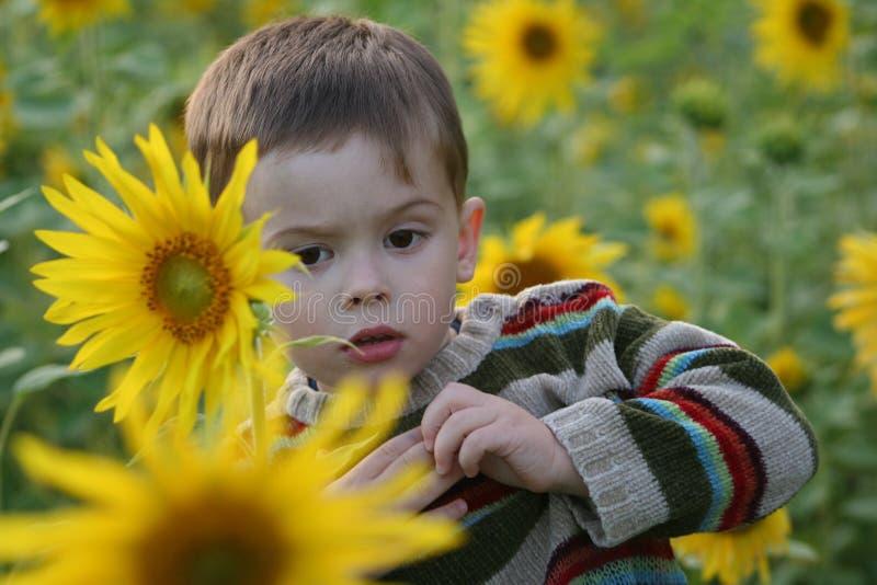 солнцецветы ребенка стоковое изображение