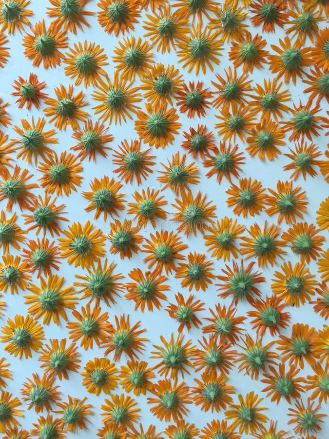 Солнцецветы - счастливое засыхание стоковые фото