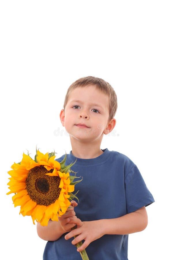 солнцецвет вы стоковое изображение rf