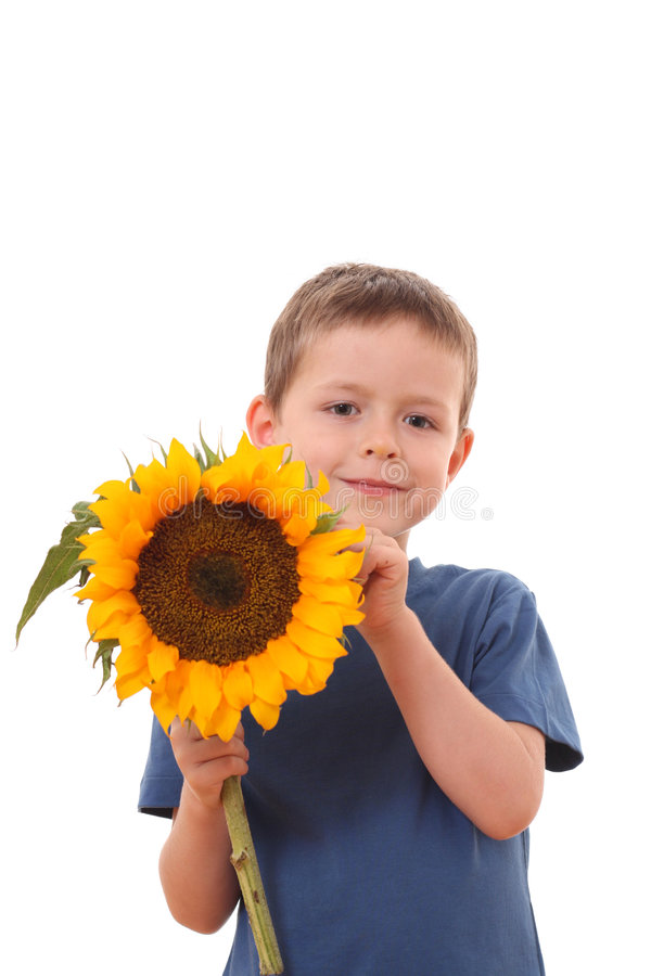 солнцецвет вы стоковое фото rf
