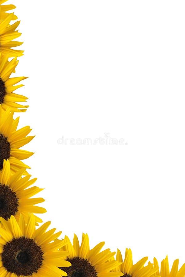 солнцецвет граници стоковые изображения rf