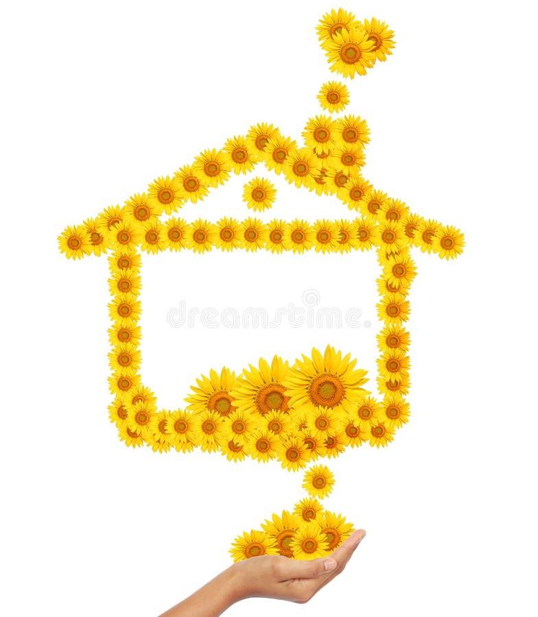 солнцецвет изображения идеи руки домашний иллюстрация штока
