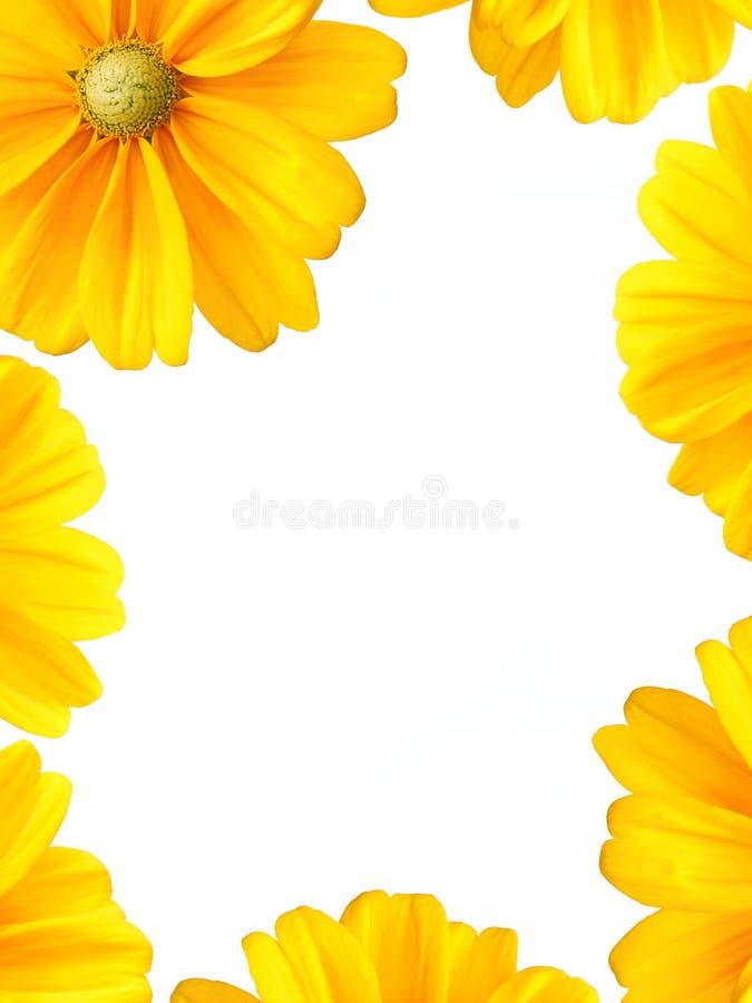 солнцецвет рамки граници стоковое фото