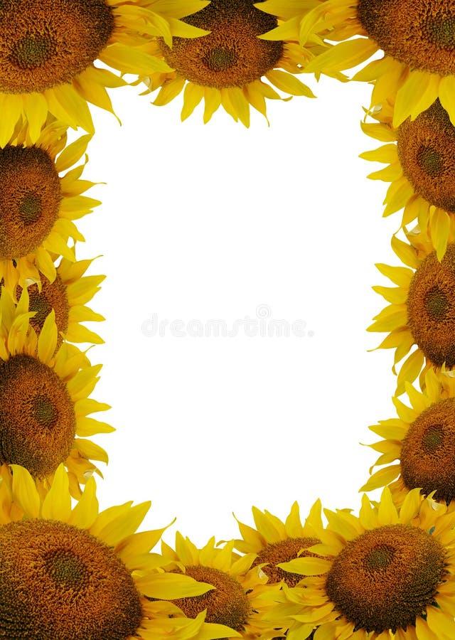 солнцецвет рамки иллюстрация вектора