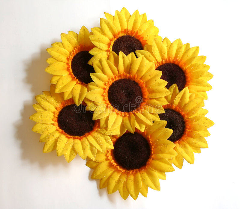 Download солнцецвет расположения стоковое изображение. изображение насчитывающей ботаническую - 477387