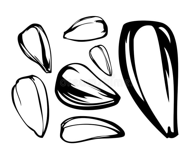 солнцецвет семени установленный иллюстрация штока