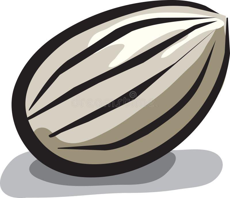 солнцецвет семени иллюстрация вектора