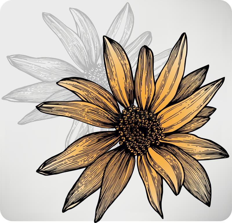 Солнцецвет цветка, рук-чертеж. Вектор. иллюстрация вектора