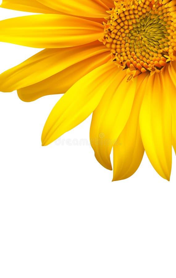 солнцецвет цветка backgound иллюстрация штока