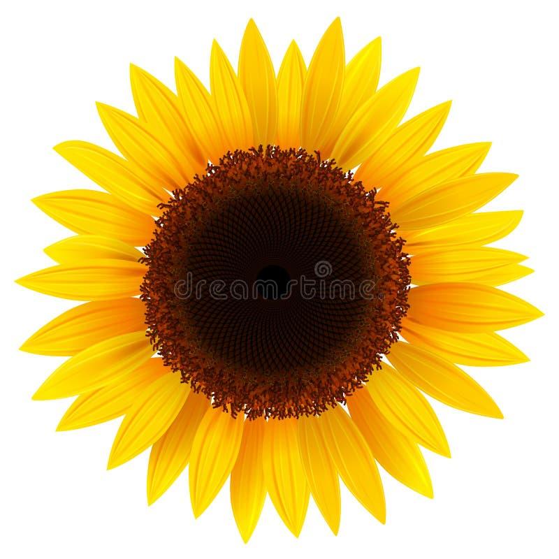 солнцецвет иллюстрация штока