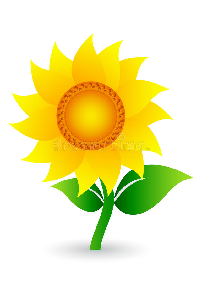 солнцецвет иллюстрация вектора