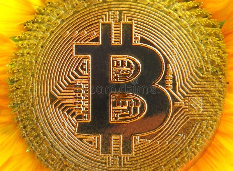 Солнцецвет cryptocurrency Bitcoin цифровой стоковые фотографии rf