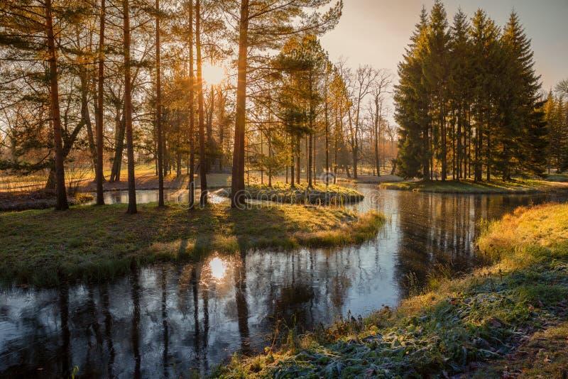 Солнце в парке стоковые фотографии rf