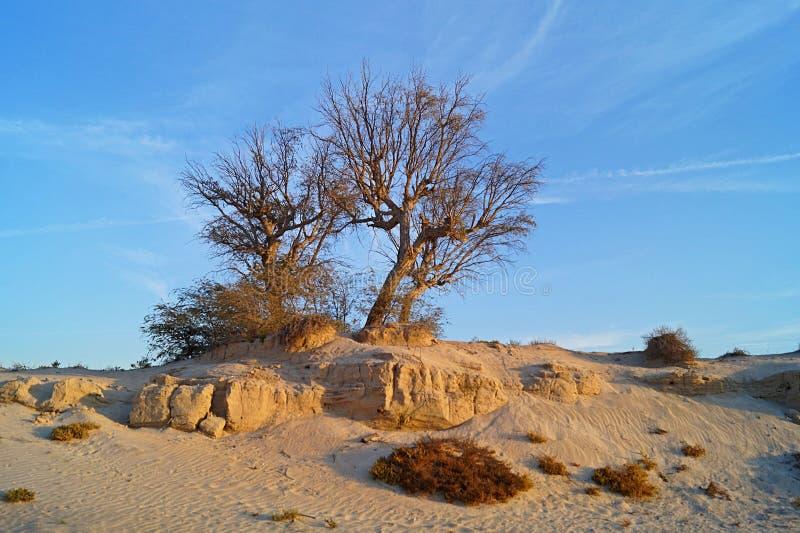 Солнце в пустыне с деревом стоковое фото rf