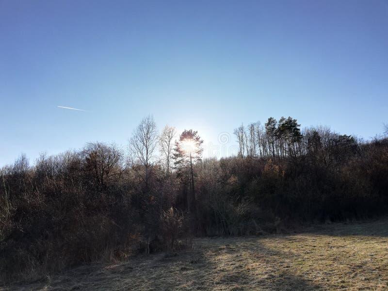 Солнце за деревьями стоковая фотография rf