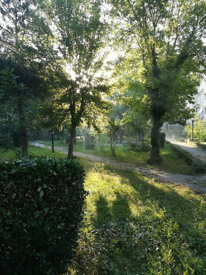 Солнце за и через деревьями стоковое фото