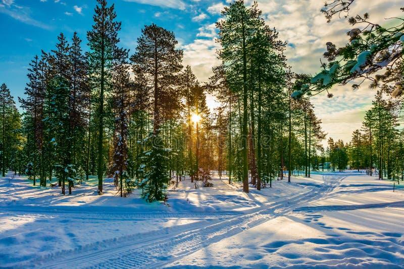 Солнце зимы приполюсное в утре стоковые изображения