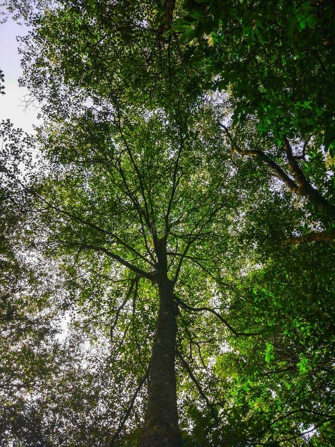 Солнце излучает скрещивание через ветви деревьев листья зеленого цвета стоковое изображение rf