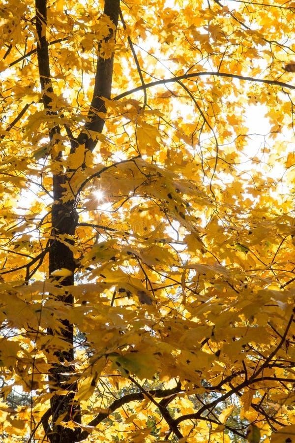 Солнце и листья в лесе осени стоковые изображения