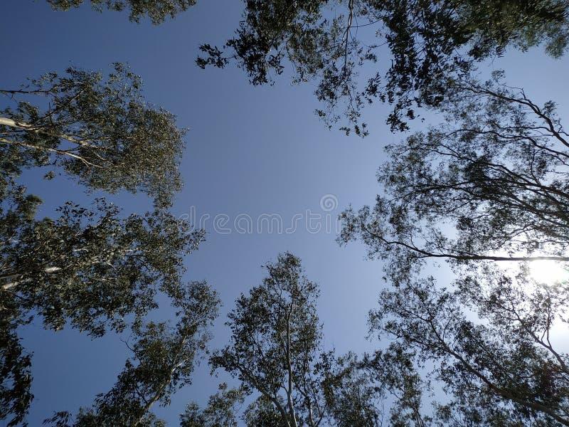 Солнце и тень деревьев стоковая фотография