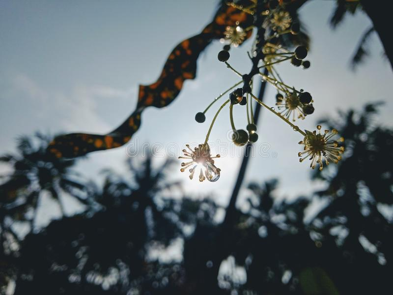 солнце и цветок стоковое изображение rf