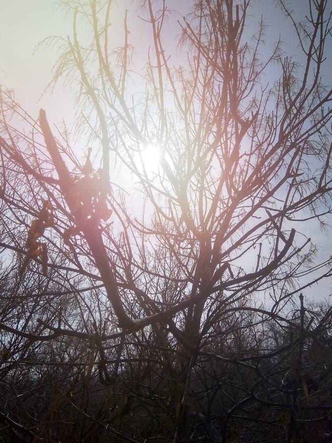 Солнце и 3 стоковое изображение rf