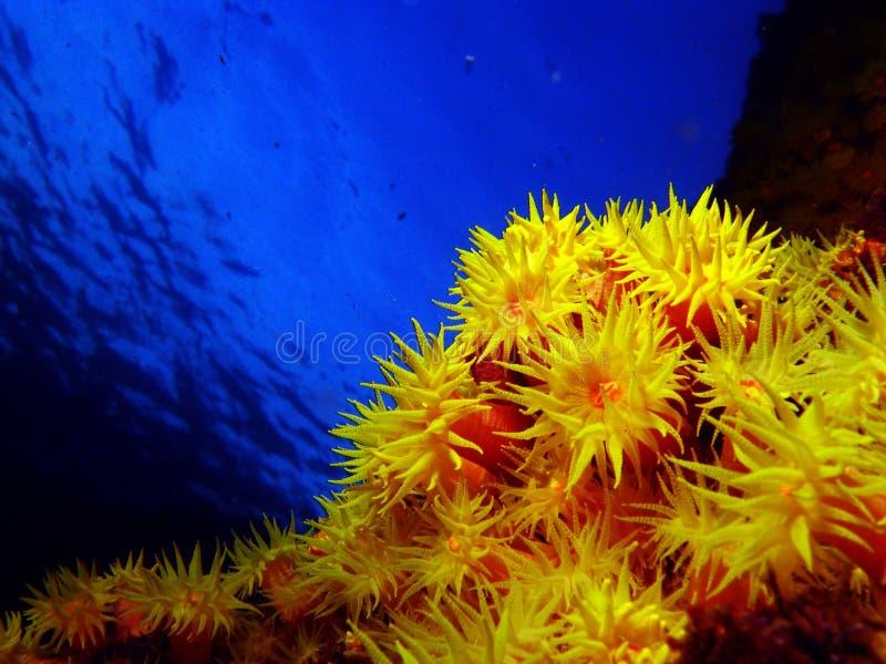 солнце коралла стоковая фотография rf