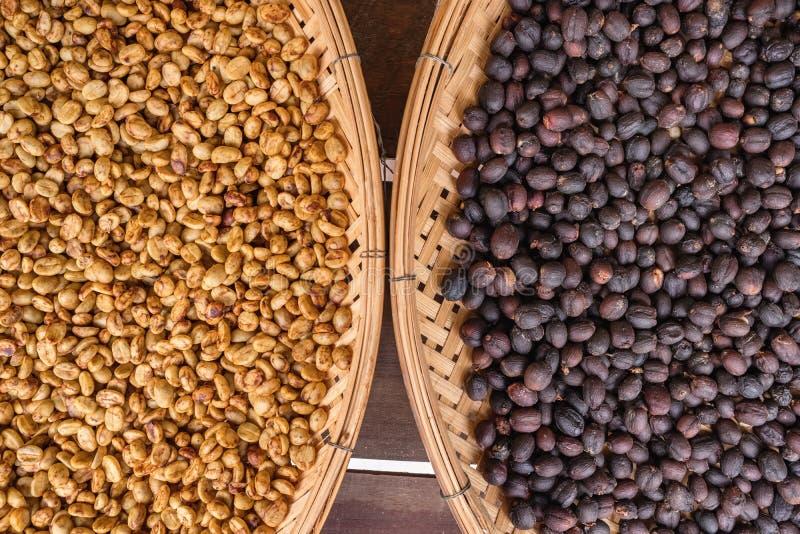Солнце кофейных зерен суша после метода влажного процесса или мытья и после естественного процесса в небольшой фабрике кофе стоковое фото rf