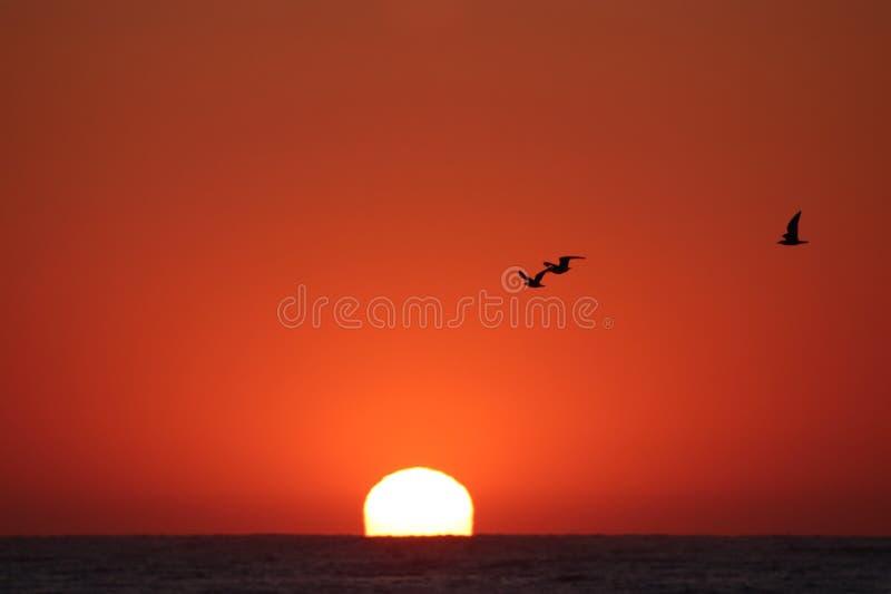 Солнце крови стоковое фото
