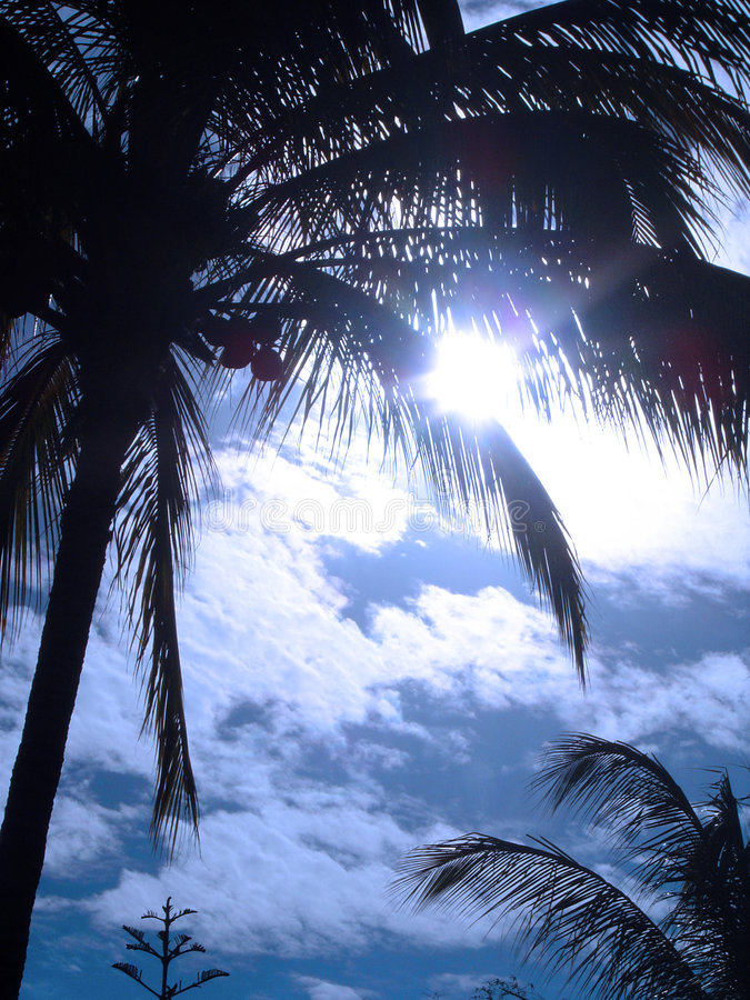 солнце ладони стоковые изображения