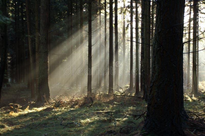 солнце лучей стоковое фото rf