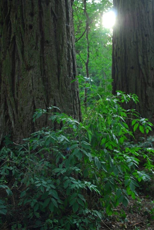 Солнце между 2 деревьями стоковое фото