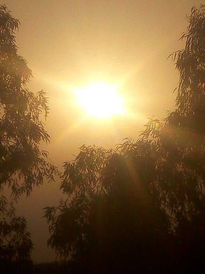солнце над деревьями в вечере стоковые изображения