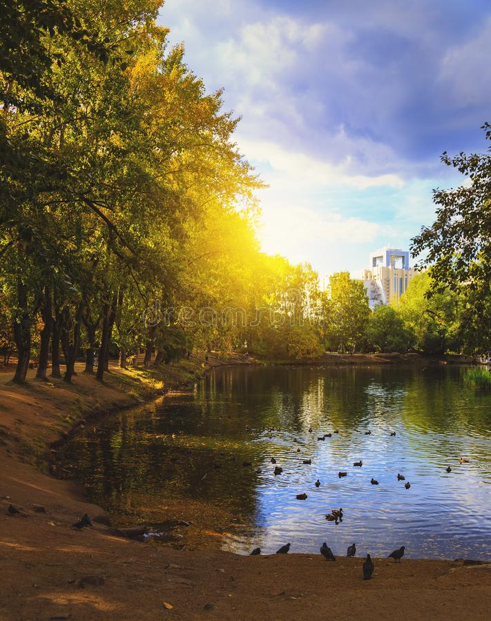 Солнце над листвой деревьев осени около пруда в парке города Птицы заплыв и прогулка вдоль берега стоковые изображения rf